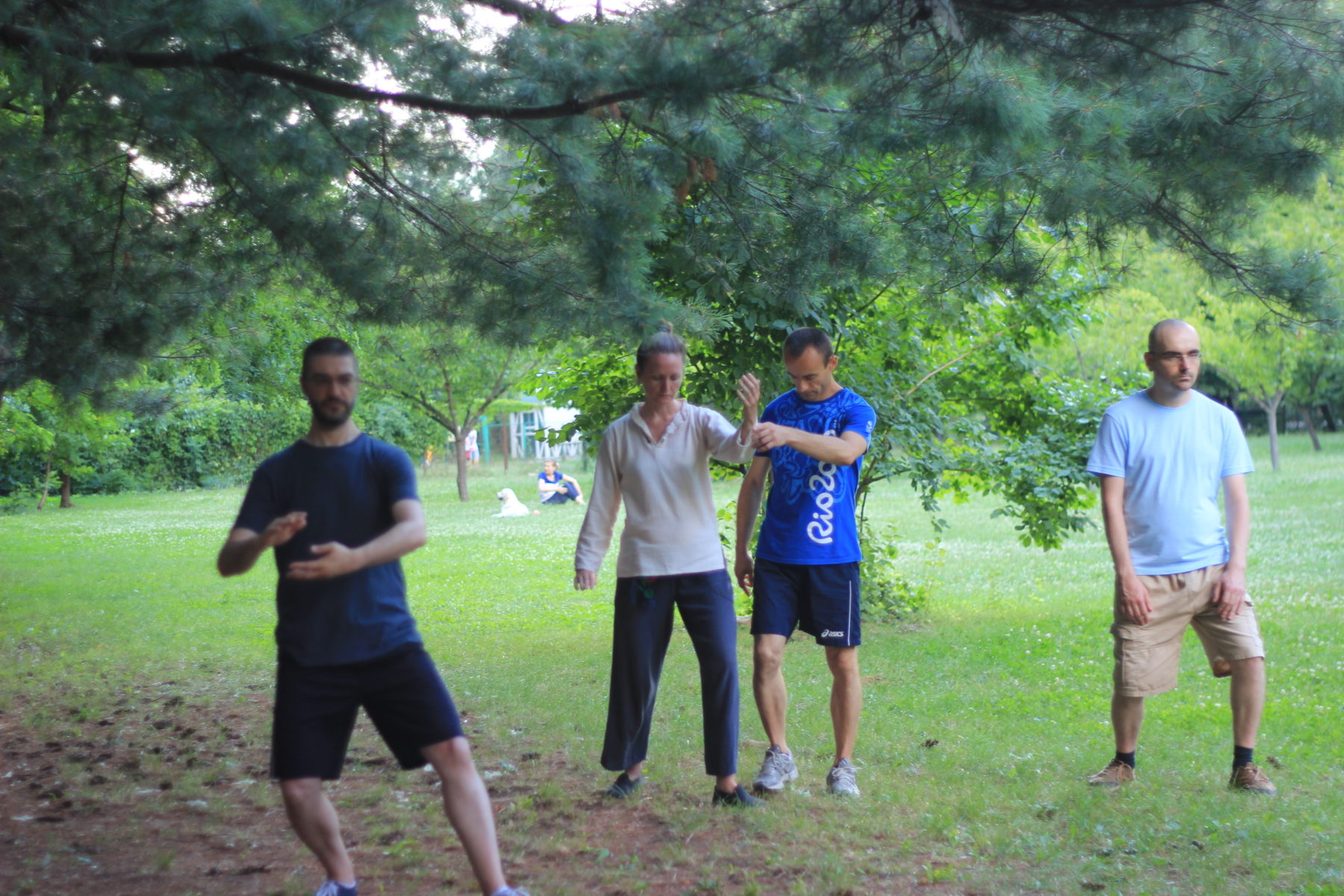 Curs Tai Chi in parc